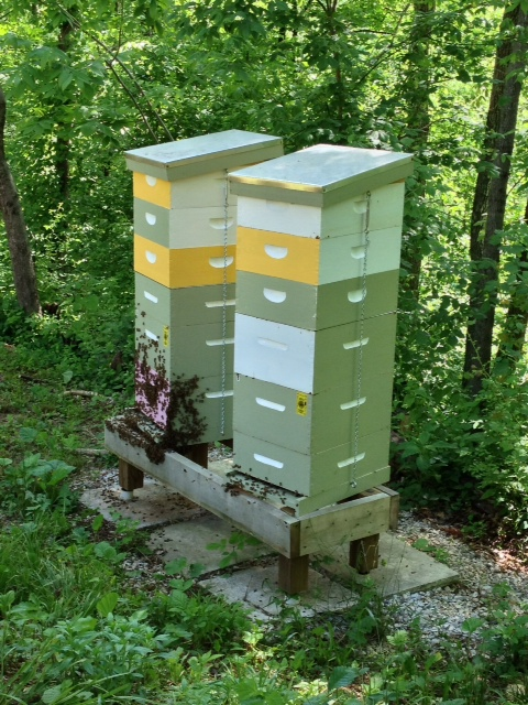 Chuck Schwalbe of the FCBA uses PVC caps filled with water at the base of his hive stands.  (Image courtesy of Chuck Schwalbe of FCBA)