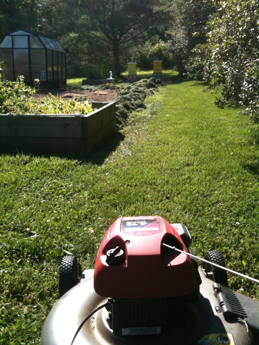 Lawnmower approaches bees