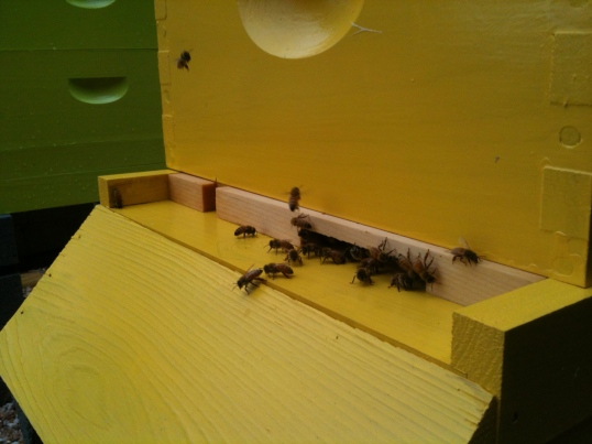 Entrance reducer makes it harder for mice and robbing pests to enter the hive, and helps keep out the cold and wind.