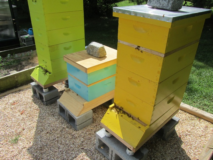 The Queen Is Free Boo Bee Honey