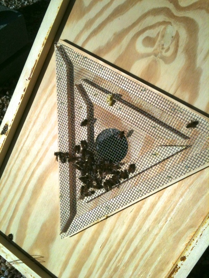 Bees come down through the triangle and exit at one of the three corners.  The triangle is screened, so they can't find their way back up.